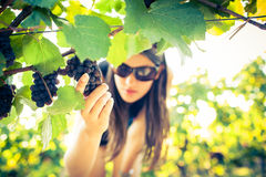 Female vintner Stock Photo
