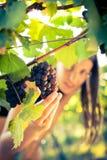 Female vintner Stock Photos
