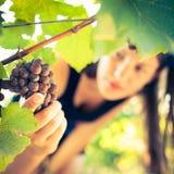 Female vintner Royalty Free Stock Photo
