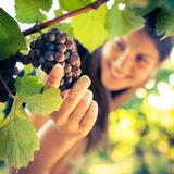 Female vintner Royalty Free Stock Photo