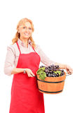 A female vintner holding a basket full of wine grapes Royalty Free Stock Photo