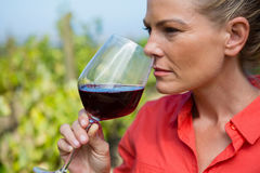 Female vintner smelling glass of wine Stock Photography