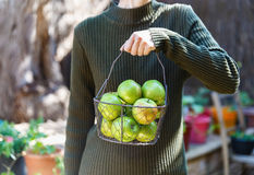 Female in warm clothing holding basket of apples Stock Photography