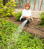 Female watering garden beds Stock Image