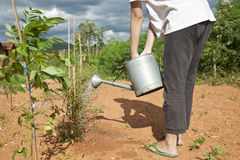 Female watering the plants Stock Photography