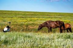 Female wildlife photographer Stock Photography