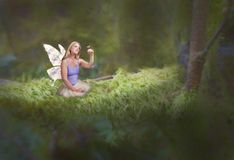 Woodland fairy. Female with wings on mossy branch stock photography