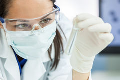 Female Woman Research Scientist With Test Tube In Laboratory Royalty Free Stock Image