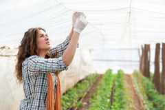 Female worker on green house plantation Stock Photography