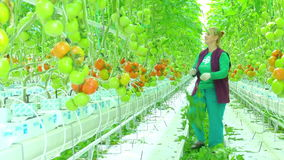 Female worker in greenhouse stock video footage