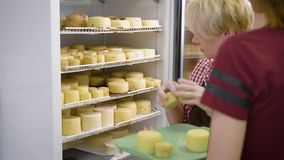Female worker putting cooked cheese heads in huge industrial fridge on a cheesemaking factory stock footage
