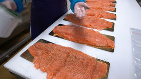 A female worker sprinkles the spices on the salmon fillet on the fish factory. stock footage