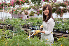Female Worker Water Plants Royalty Free Stock Photo