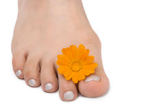 Females feet with yellow flower. Females feet with yllow flower on white royalty free stock photography