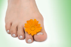 Females feet with yllow flower. On white royalty free stock images