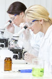 Females, Scientific on Microscopes in Laboratory Royalty Free Stock Image