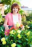 Femelle dans les entretenir de jardin des fleurs Image libre de droits