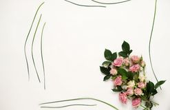 Feminine desk with pink roses, green leaves, and gift bag on white background. Flat lay, top view. Flower background. Women`s day,. Feminine desk with pink roses Royalty Free Stock Photos