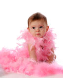 Feminine Fluff Stock Photos