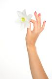 Feminine hand with flower Royalty Free Stock Photos