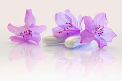 Feminine hygiene product. Women's menstrual pads with flowers royalty free stock images