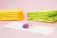 Feminine hygiene products, pink flower on menstrual pad. Personal care, woman hygiene conception photo. Soft tender protection for Stock Photo