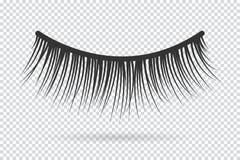 Feminine lashes vector. False eyelashes. Hand drawn Royalty Free Stock Image