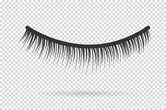 Feminine lashes vector. False eyelashes. Hand drawn Royalty Free Stock Images
