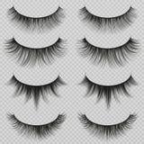 Feminine lashes vector set. Realistic false eyelashes fashion collection. Long eyelash and false femininity black eye lash illustration Stock Photography