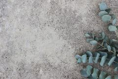 Feminine styled stock photo. Floral composition of Green silver dollar eucalyptus leaves and branches. Grunge concrete