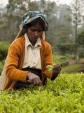 Femme 2 du Sri Lanka image libre de droits