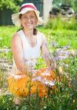 Femme aîné avec la camomille bleue Photo libre de droits