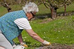 Femme aîné dans le jardin Image libre de droits