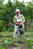 Femme aîné travaillant dans le jardin Photos libres de droits