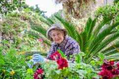 Femme adulte supérieure parlant aux usines dans le jardin photographie stock libre de droits