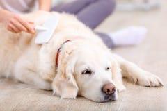 Femme agréable ayant l'amusement avec un chien Photographie stock