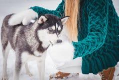 Femme alimentant le chien sans abri sur la rue, Photo stock
