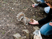 Femme alimentant un écureuil image libre de droits