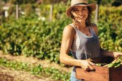 Femme amicale moissonnant les légumes frais de la ferme image libre de droits