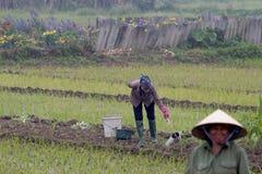 Femme arrosant les plantations fraîches à la main avec une poche photographie stock libre de droits