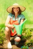 Femme arrosant les plantes de tomate vertes en serre chaude photo stock