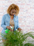 Femme arrosant une plante verte Image libre de droits