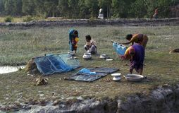 Femme assortissant les crevettes qu'elles attrapent à la rive de Brahmaputra bangladesh 02 03 2001 photos libres de droits