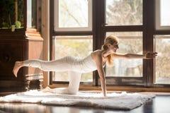 Femme attirante de jeune yogi dans la pose de chien de gibier à plumes, intérieur de maison Photo libre de droits