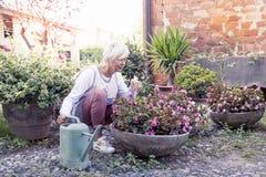 Femme au foyer attirante arrosant ses fleurs avec amour Photographie stock