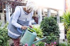 Femme au foyer attirante arrosant ses fleurs avec amour Images stock