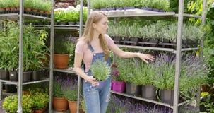 Femme au stand avec des fleurs banque de vidéos