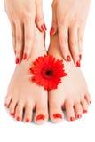 Femme avec de beaux ongles manucurés rouges photos stock