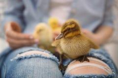Femme avec de petits oiseaux mignons, Photos libres de droits