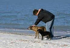 Femme avec des chiens sur la plage. Image libre de droits
